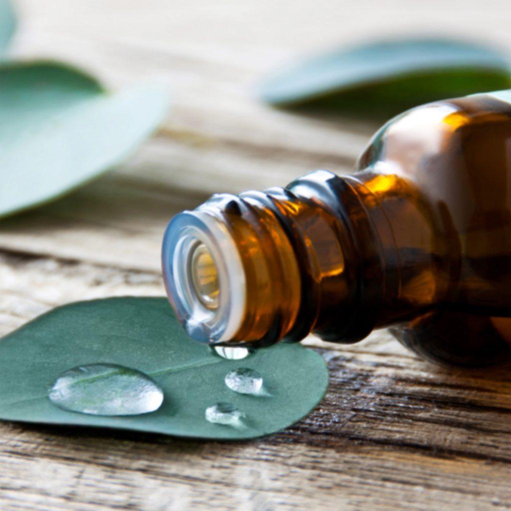 Eukalyptus - Öl