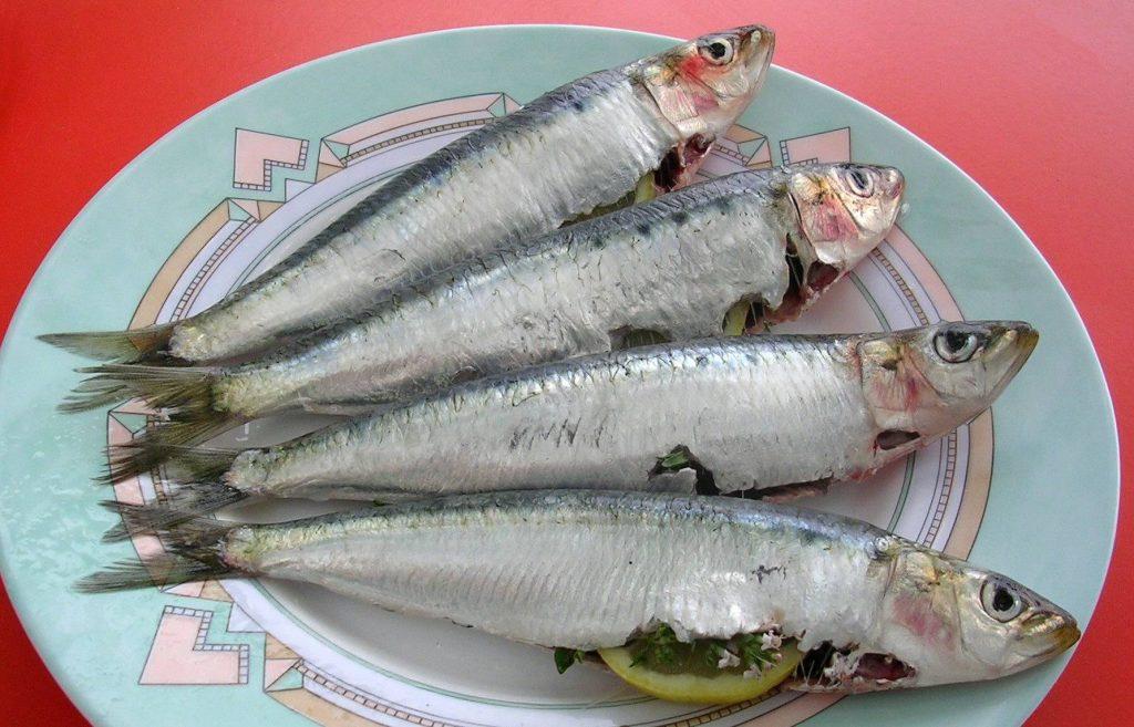 Sardines_crues