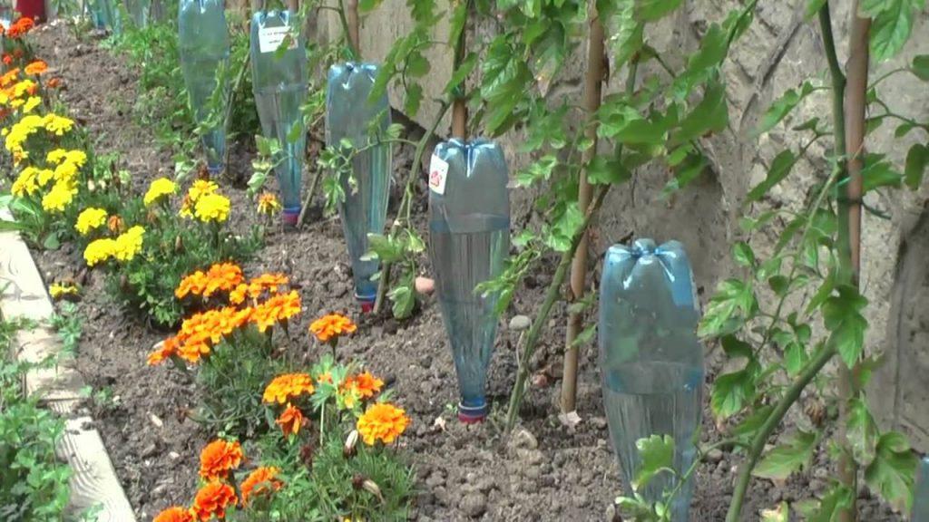 10 astuces jardinage pour avoir des plantes en bonne sant - Quand mettre du fumier dans son jardin ...